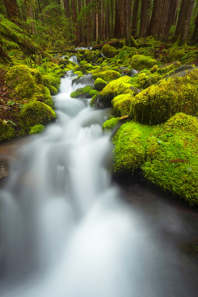 Stream in forest, Olympic National Park, Washington