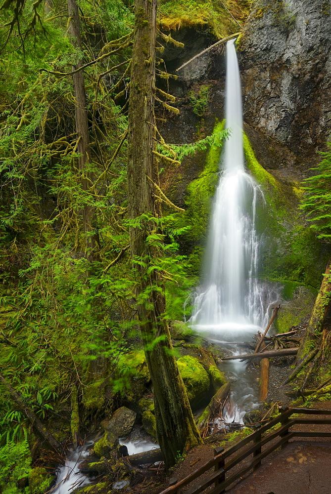 USA, Washington, Olympic National Park, Marymere Falls, USA, Washington, Olympic National Park