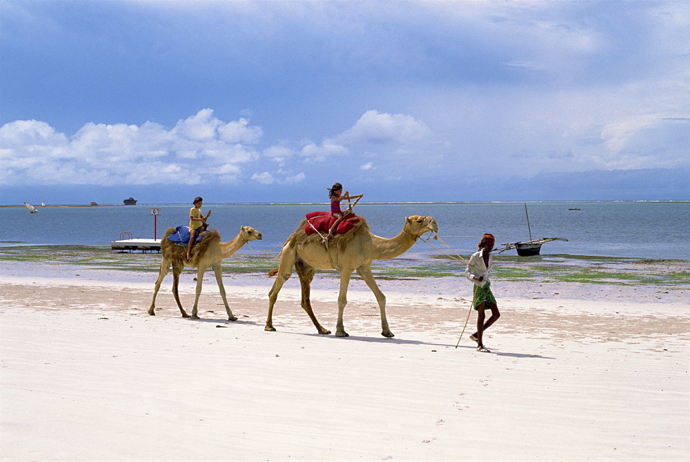 Camels for tourists, Nyali Beach, Kenya, East Africa, Africa