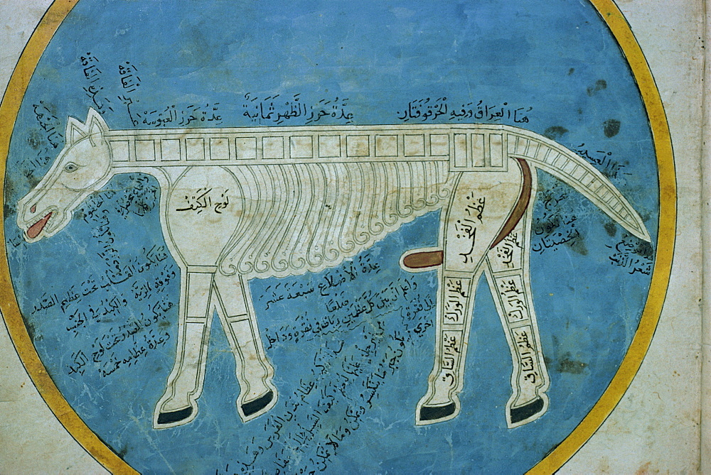 Manuscript showing anatomy of an animal, Mashad, Iran, Middle East - 1-8116