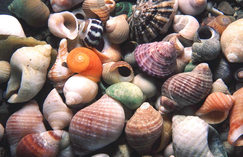 Mixed Seashells. UK - 1004-92