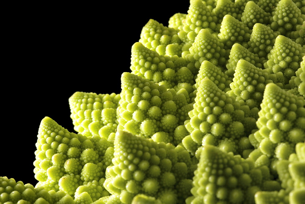A detail showing the fractoid florets of the Romanesco Cauliflower - 1005-102