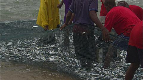 Sardine Run, fish in crate, crates and truck on beach, close up, South Africa