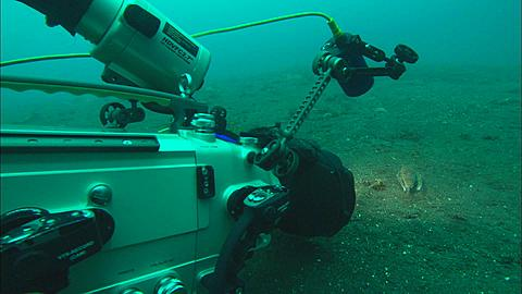 Filming lion gurnard, Indonesia