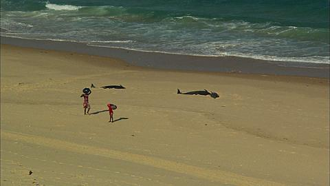 Dead dolphins on beach with two people, people walking, Pan along beach with dead dolphins,Mozambique