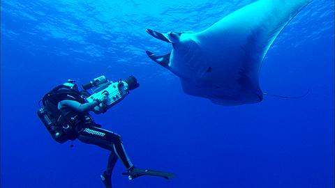 Rebreather Diver films and another Diver, mostly out of frame, holding gear, manta swims in background Mexico  - 1010-2527