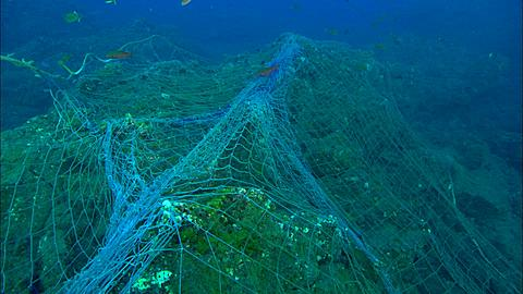 Drift Net, laying across reef Mexico