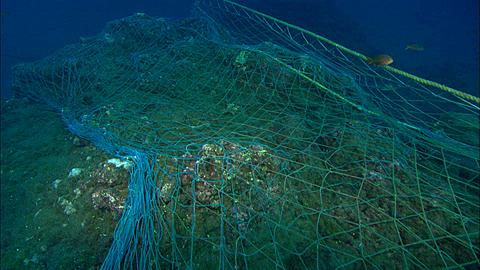 Drift Net, laying across reef, over edge reveals sand bottom Mexico