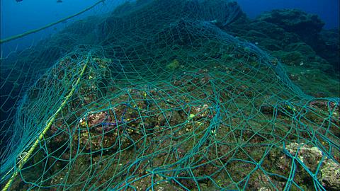 Drift Net, laying across reef, up over edge along ridge Mexico