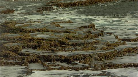 Coastline, blowholes, iron shore terraced tide pools, Tonga, South Pacific Ocean
