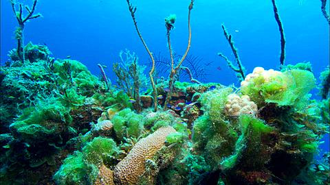 High quality stock videos of little fish reef fish underwater blue and yellow little fish eleuthera bahamas north publicscrutiny Image collections