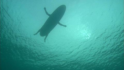 Shark point of view of surfer paddling silhouette, low angle, Maldives, Indian Ocean