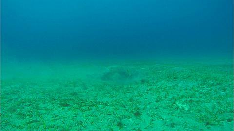 Turtle and dugong. Abu Dhabi, United Arab Emirates, Gulf