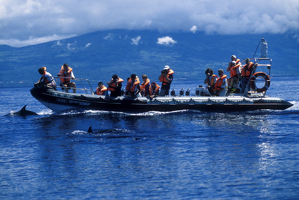 Whale-watchers and Atlantic Spotted Dolphins (Stenella frontalis). Azores, Portugal, Atlantic
