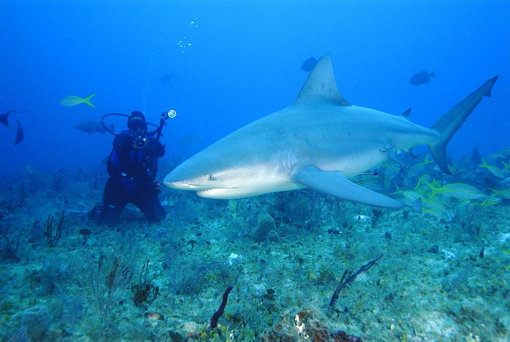 Bull Shark & diver. Bahamas, Atlantic Ocean - 1012-39