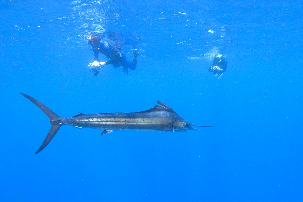 Sailfish & snorkelers. Mexico