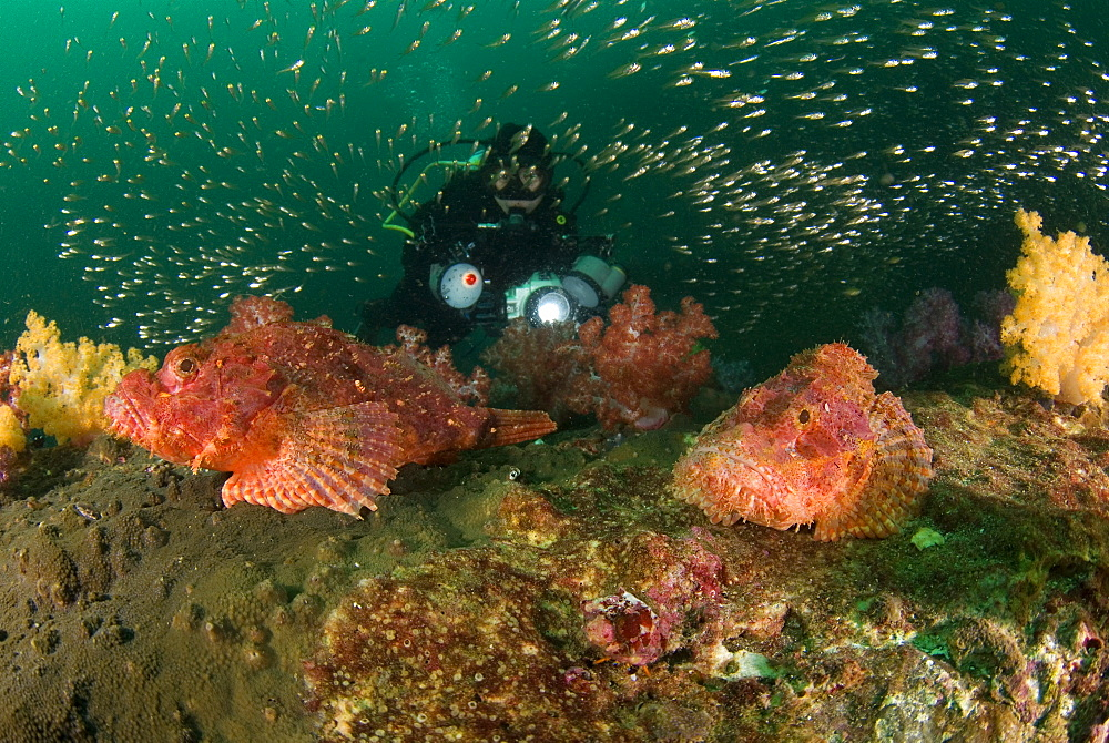 Sorpionfish, Soft Coral, Glassy Sweepers & diver. Myanmar (Burma)