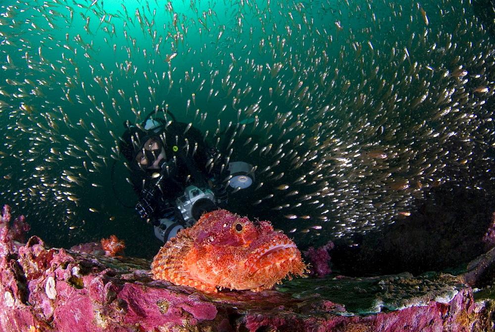 Sorpionfish, Glassy Sweepers & diver. Myanmar (Burma) - 1012-89