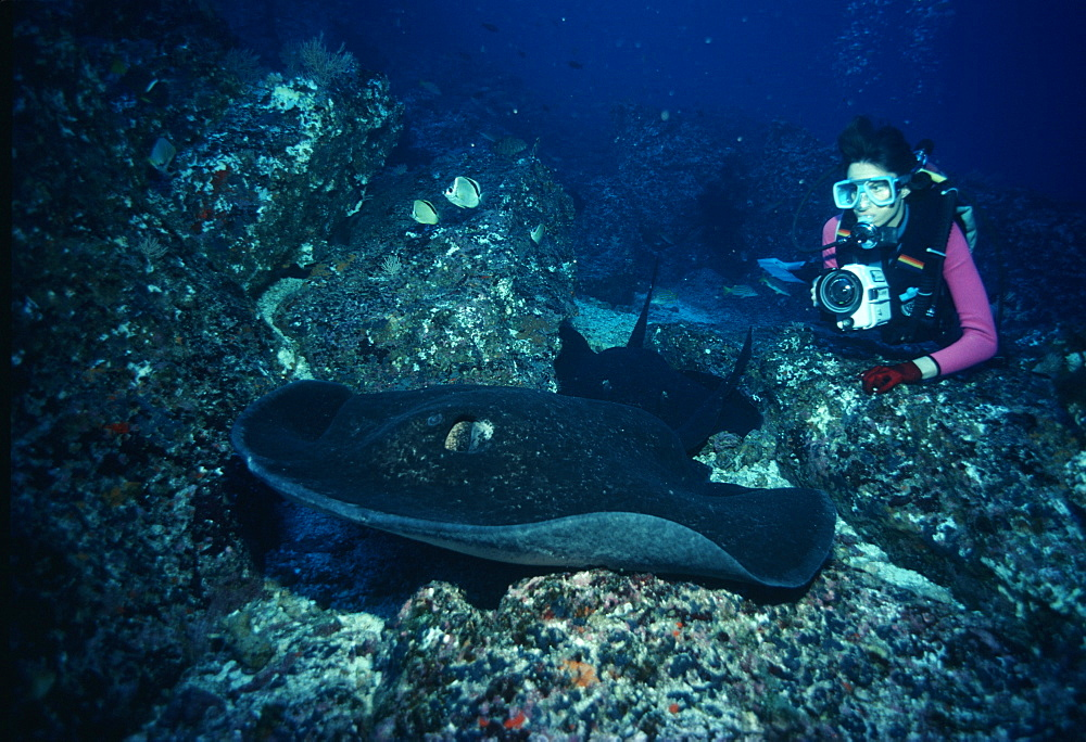Marbled Ribbontail Ray & photographer (Taeniura melanospilos).