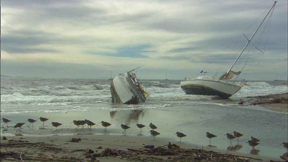 Boats washed ashore in winter storm (shorebirds in FG). West Santa Barbara, California, USA