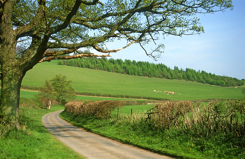 Country lane in spring, Oxfordshire, UK
