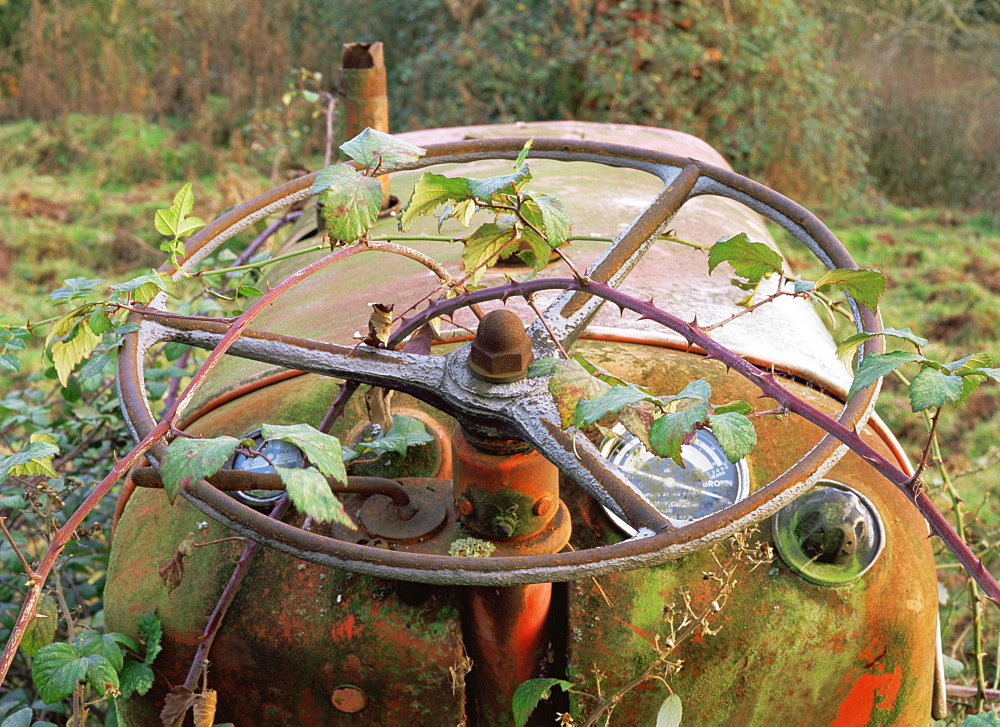 Abstract of disused tractor steering wheel with brambles, UK - 1024-163