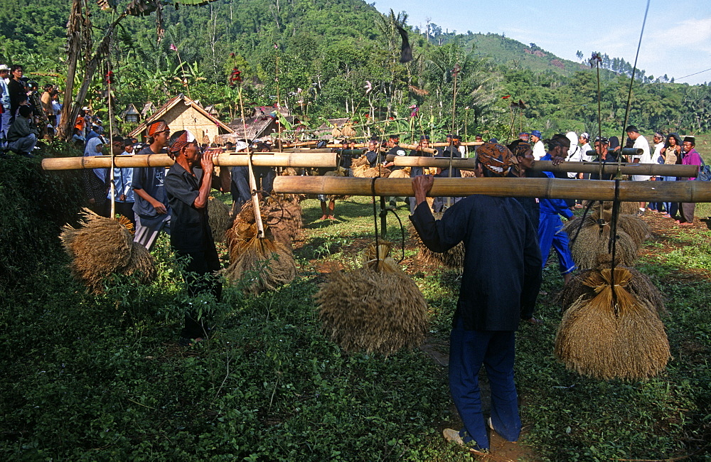 Kasepuhan musicians carrying rice bundles at annual rice festival Seren Tahun, West Java, Indonesia - 1024-250