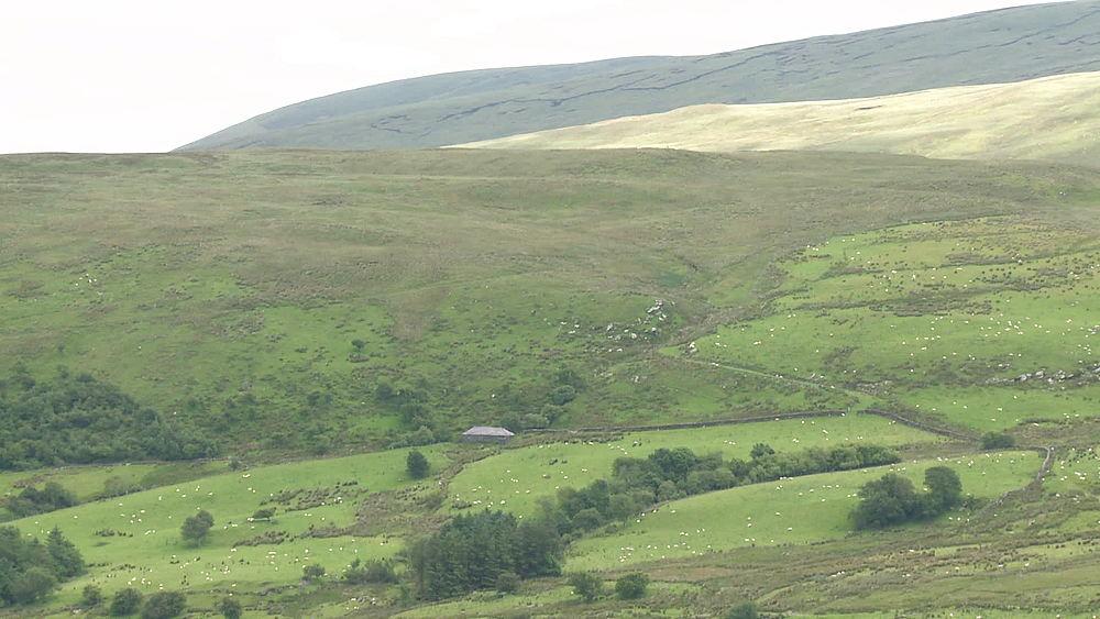 mountain & sheep (wide shot) & (very wide shot), Snowdonia, Wales, United Kingdom