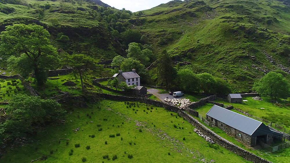 sheep crossing bridge into farm (top shot)