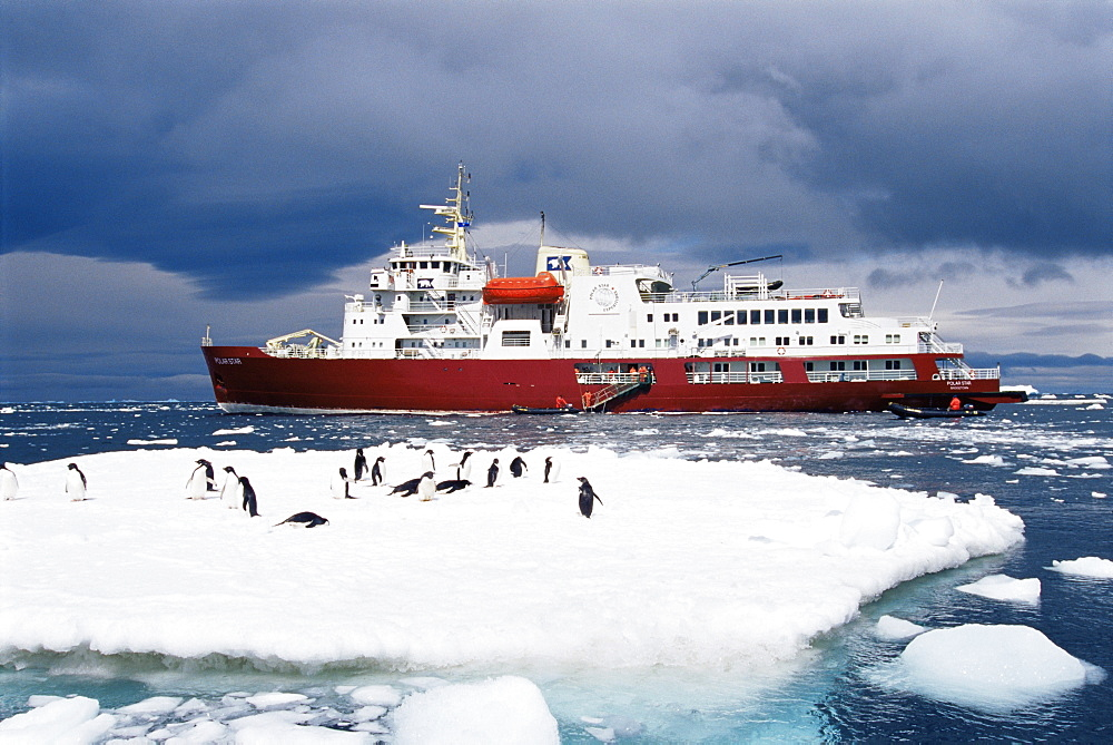 Adelie penguins (Pygoscelis adeliae) with ecotourism ship 'Polar Star' in background, Paulet Island, Antarctica, Southern Ocean