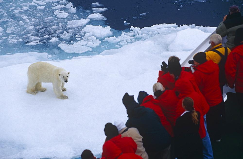 Polar bear (Ursus maritimus) and tourists aboard eco-tourism ship. Spitzbergen, Polar High Arctic, North Atlantic.