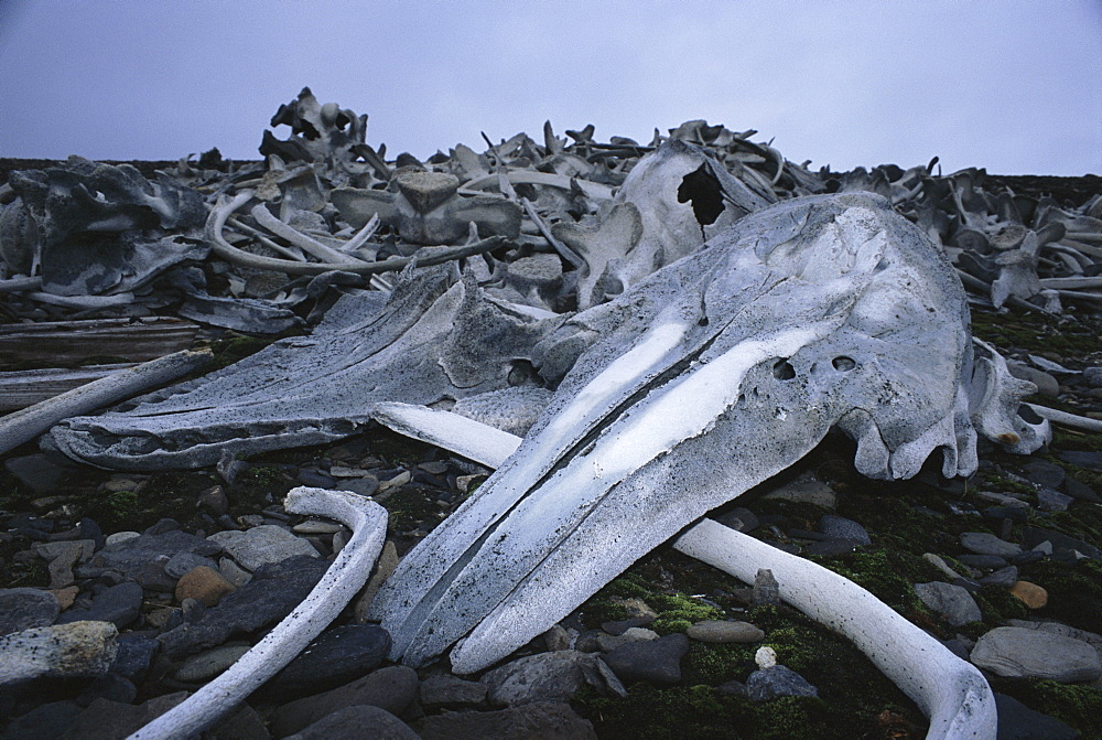 Beluga grave yard at an old whaling station on Spitsbergen. Svalbard.