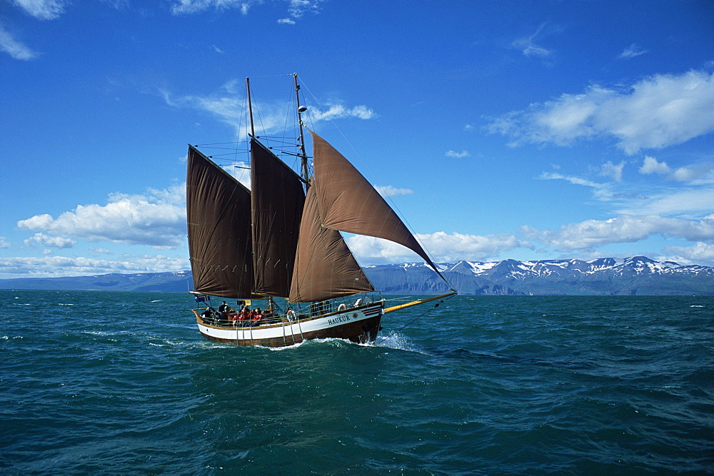 Whale watching vessel, run by North Sailing. Husavik, Iceland
