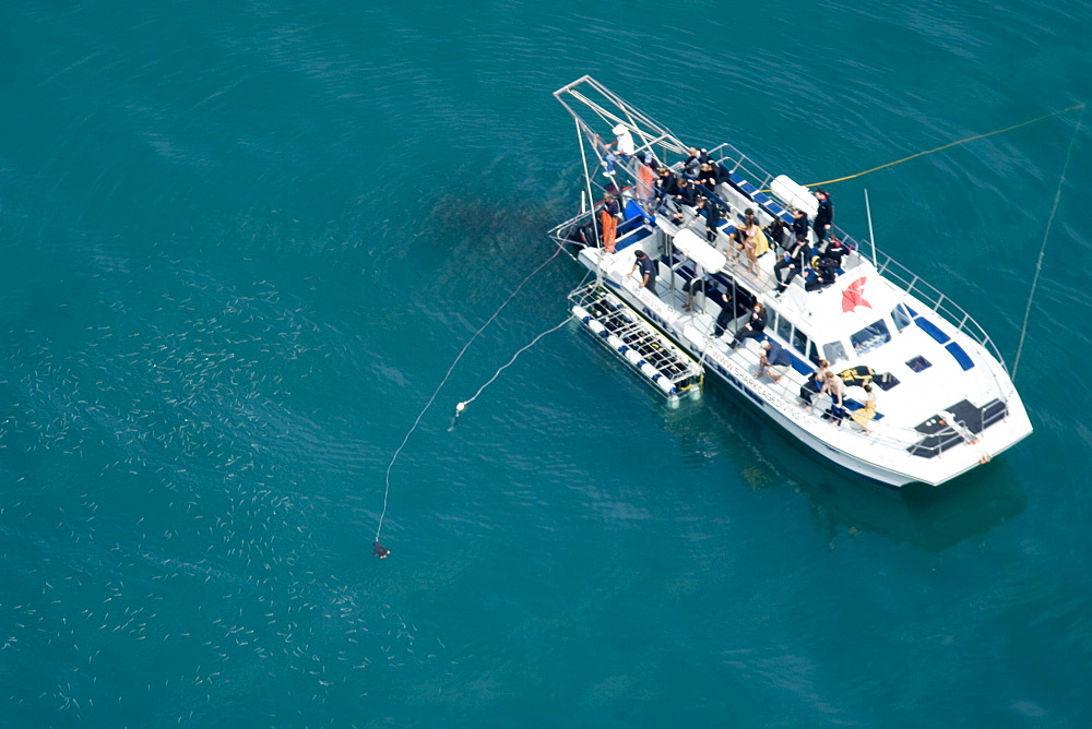 Aerial of shark diving tourist boat with chum on lines.  Walker Bay, South Africa - 1036-298