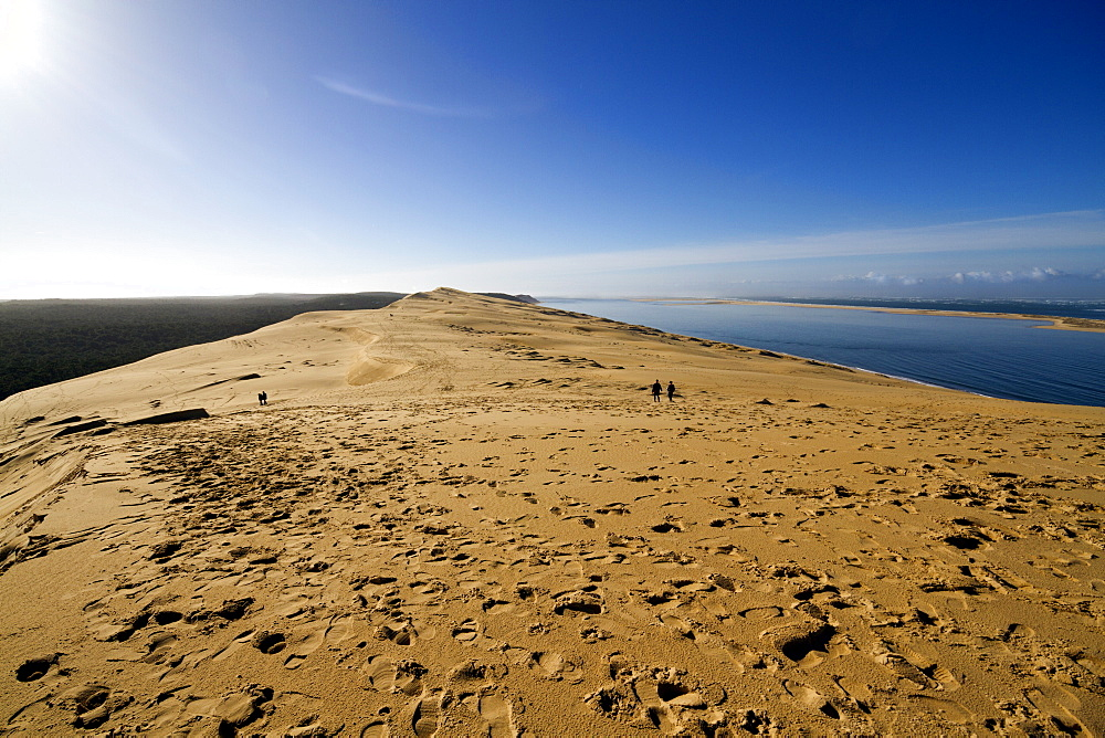 Pilat Dune in Test-de-Buch, at 110 m high, the highest sand dune in Europe, Nouvelle Aquitaine, France, Europe - 1061-41