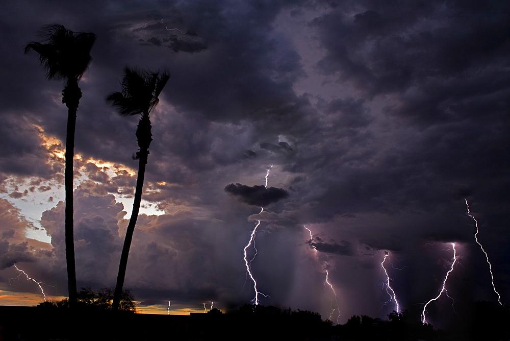 Early Evening Display, Lightning; Thunderstorm; Early evening lightning storm; Tucson; Arizona - 1065-31