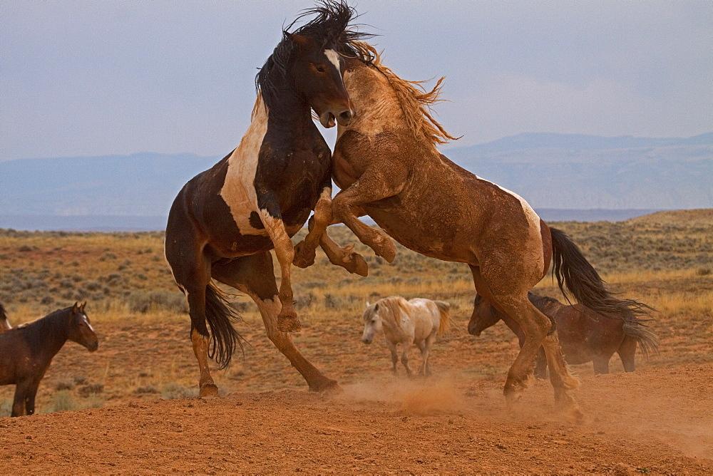 Tameless Horses,  - 1065-58