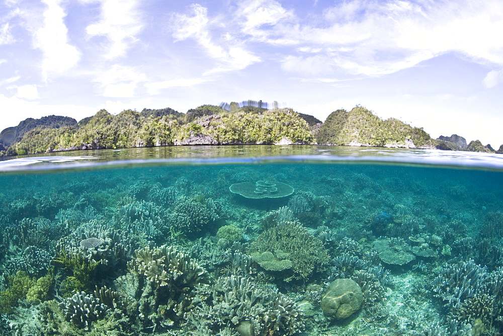 Coral reef and limestone islands.  Misool, Raja Ampat, Papua, Indonesia, Pacific Ocean.