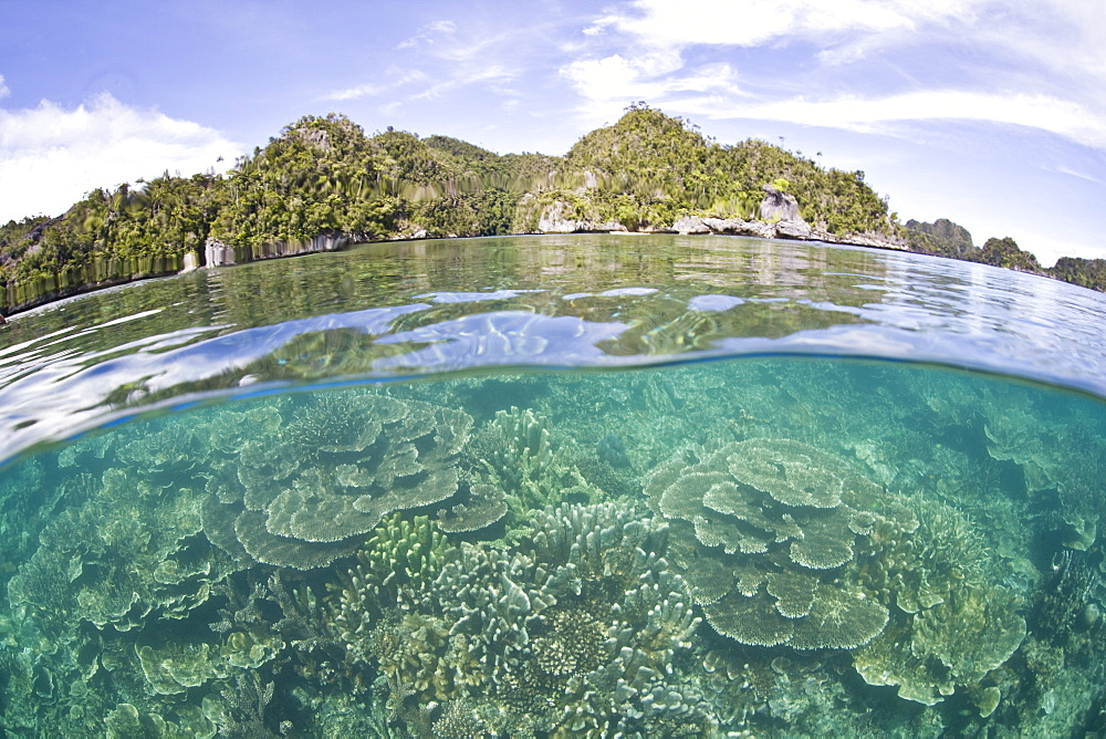 Coral reef and limestone islands.  Misool, Raja Ampat, Papua, Indonesia.  More info:  This region is called the heart of marine biodiversity. - 1067-16