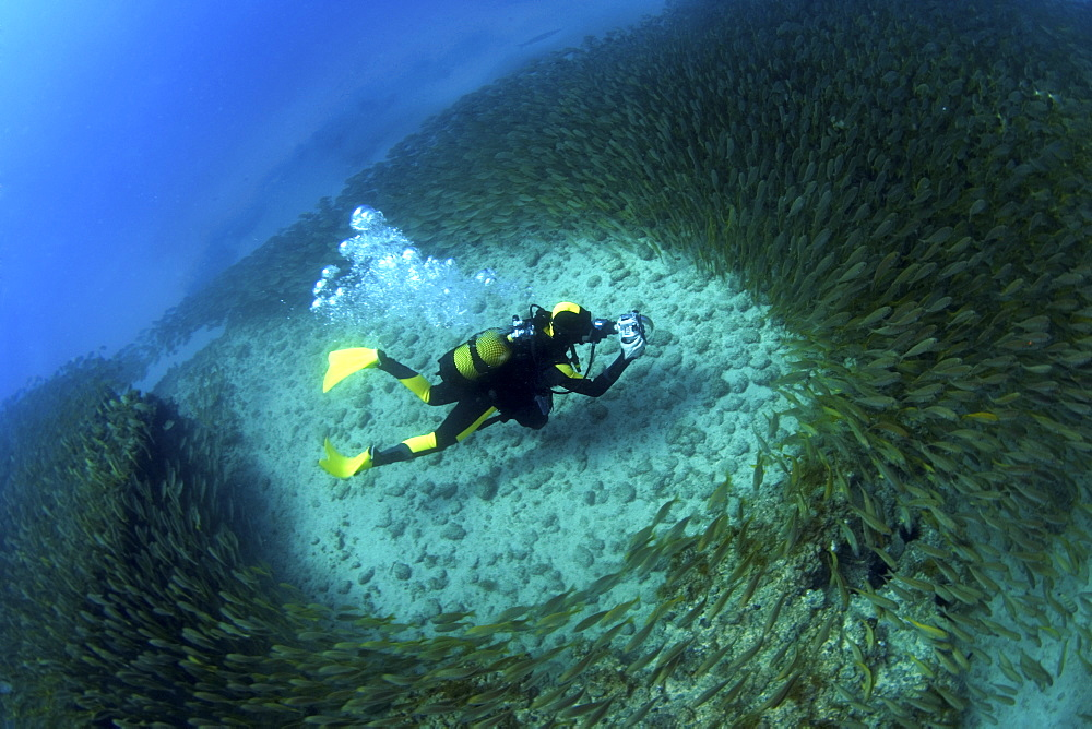 Photographer surrounded by shoal of grunts, Gran Canaria, Canary Islands - 1072-2