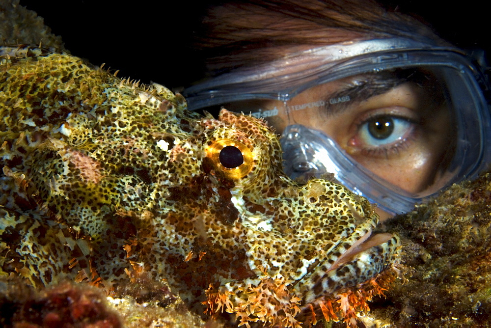 Scorpion fish eye with diver eye, Indonesia