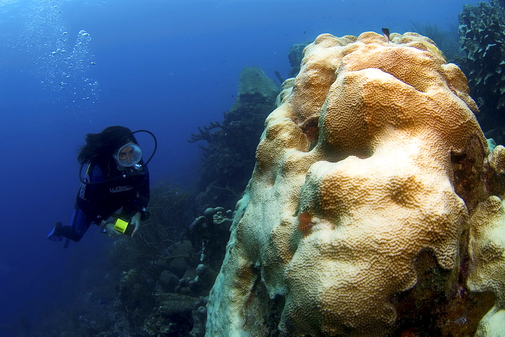 Bleached coral damaged by water warming and diver, Los Roques, Venezuela - 1072-33
