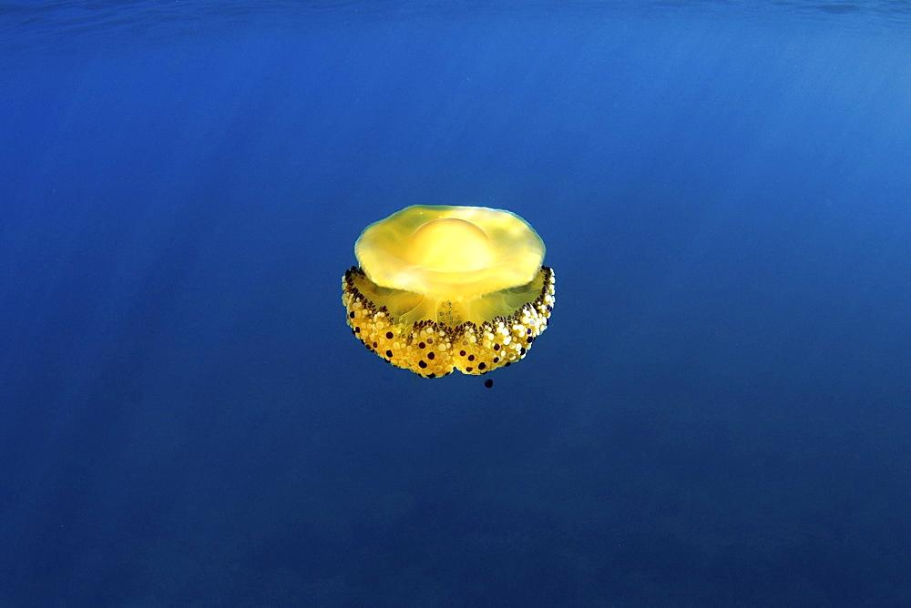 jellyfish, Eivissa, Balearic Islands - 1072-53