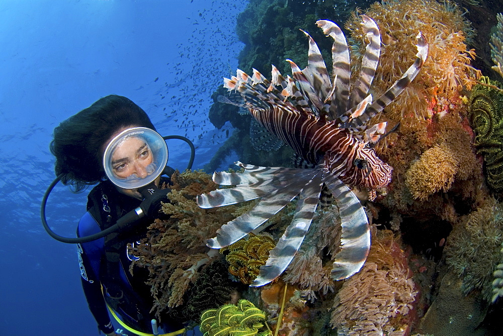 Lion fish and female diver. Egypt, Red Sea - 1072-62