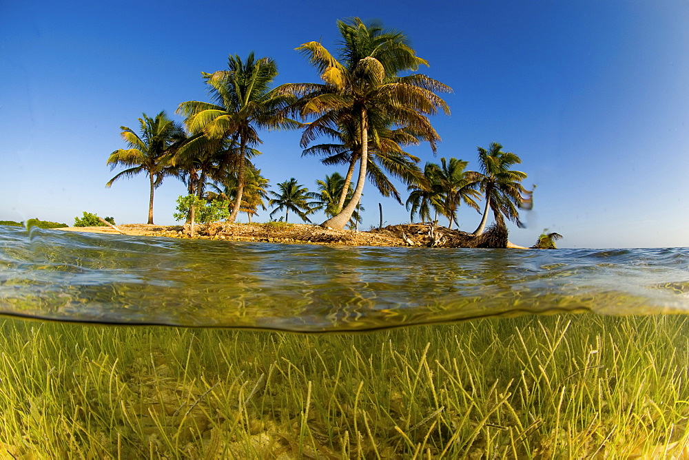 split view of Island with palm trees, Belize - 1072-72