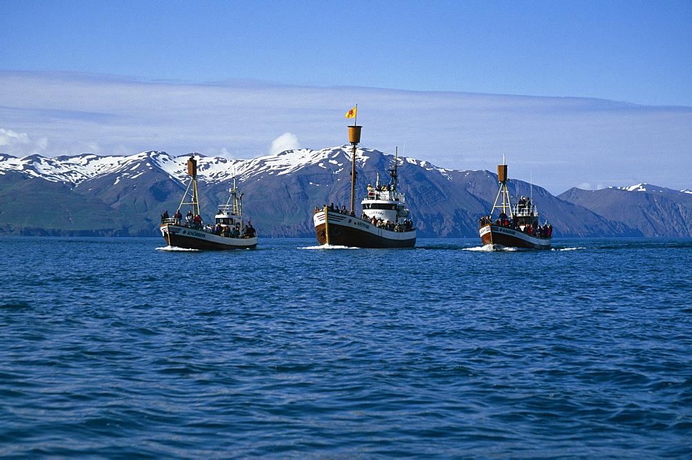 Fleet of North Sailing's whale-watching boats in beautiful setting of Skj·lfandi Bay. HusavÌk, Iceland.