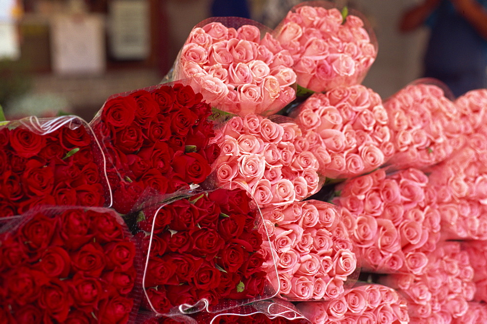 Roses for sale in market, Annecy, Haute Savoie, France, Europe - 11-335