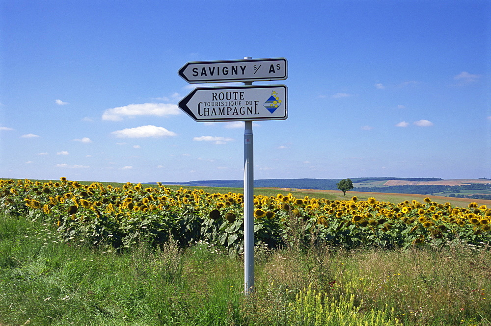 Road sign and sunflowers, Route de Champagne, Savigny, Champagne Ardenne, France, Europe