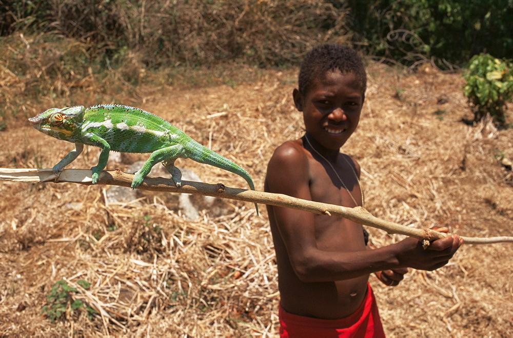 Boy with chameleon, Nosy Be, Madagascar, Africa - 110-10220