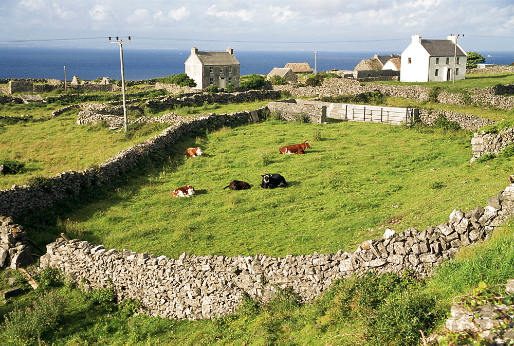 Walled fields, Inishmore, Aran Islands, County Galway, Connacht, Eire (Republic of Ireland), Europe